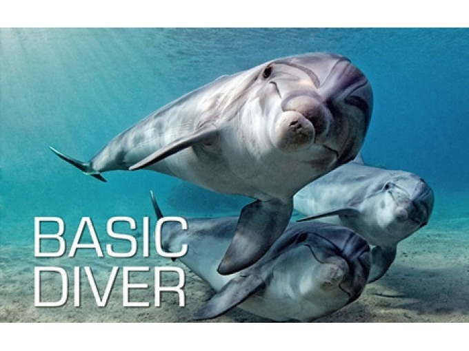 Scuba Skills Update – Dolphin's Diving Center